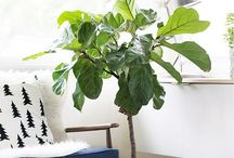 plants in your home