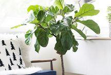 Inomhusväxter