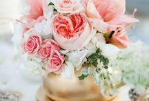 {Flowers & Plants} / by Carolina Pereira
