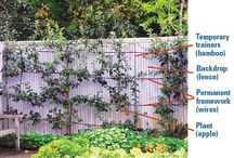 Espaliered Orchard