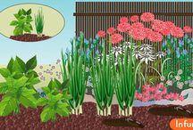 Как избавиться от садовых слизней