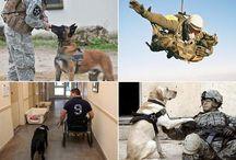 Psy w służbie