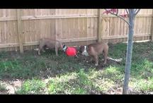 TUGGO Dog Toy TV / Videos featuring TUGGO dog toy!