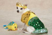 Pets: Halloween Costumes / Help your pet win best-dressed this Halloween with costumes for furry friends of all sizes.
