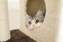 ネコ見いつけたーー / 癒されるネコちゃん http://smileyjoy.com/