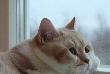 Cats / by Savannah Graham
