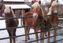 Christmas Horses / Happy holidays from these guys!