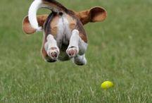 Dogs / Dogs  / by Melissa Ralston-Wynn