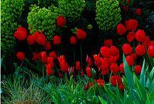 Garden: plant combinations