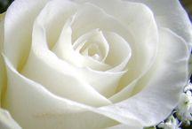 White color , my favorite
