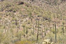 Travel Arizona