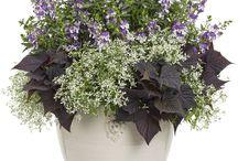 Grønt / Blomster, buketter, planter, krukker