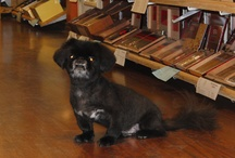 Staff Pets / We love our pets! / by Serious Cigars