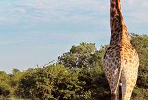 África do Sul / Roteiros de viagem, safáris, dicas de hospedagem e passeios na África do Sul