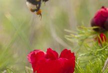 Bee (hony)