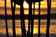 De lokale palmer