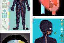 hrik - human body