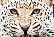 Tama katter och husdjur / Massor av olika kattdjur  Men ni hörde ordet tama