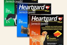 Protect Your Pet From Heartworm!