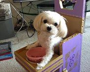 Generous Donors / Thank you for your generous support of our Havanese Rescue dogs!!    http://www.havaneserescue.com/index.php/donations2 How your donations are used: http://www.havaneserescue.com/index.php/donations2/117-general/225-how-your-donations-are-used