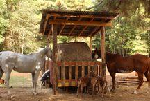 hevoset, lehmät