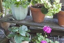 Garden by Lovely Life