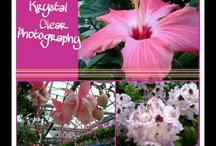 Krystal Clear Photography