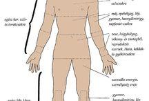 testdiagnosztika