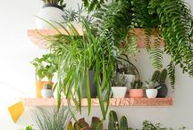 Plants for home / Plant ideas for home