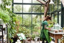 Greenhouse and Indoor gardens / Our lives with the plants we love!