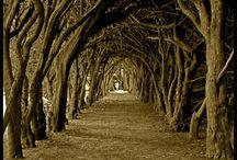 fantasy příroda
