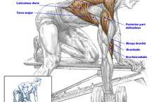 fitness anatomie
