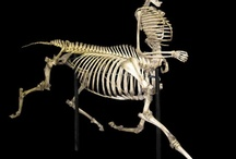 Bones / by Mother Eagle