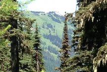 Spokane hikes and things to do / by Jennifer Duggan