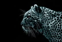 Animals / You can find here cute and wild animal photos.