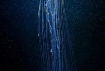jeLLyFisH / Everything about jellyfish