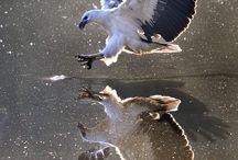 birds: diversity