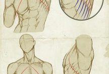 Anatomi sanatı