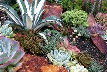 Cacti gardens