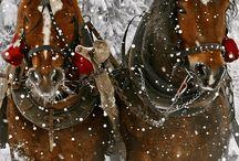cavalli sotto la neve