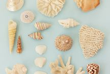 she sells seashells  / by Cindy Cowles