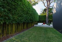 bamboo hedges