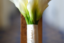 Callas / My favorite flower in varying shades #callalily #flower / by Calla Design