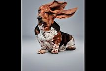 Funny Dogs / by So DogGone Funny