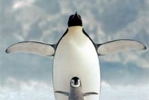 Pics of penguins / by Anna Sugden