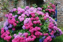 plante si flori