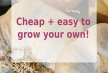 || Get Gardening ||