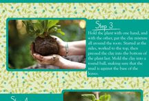 Garden - DIY