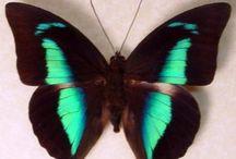 Butterfly's  / by Lily Alaniz