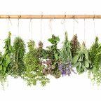 Herbes médicinales